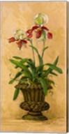 Orchid Revival II Fine-Art Print