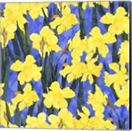 Fertile Rising - Daffodils Fine-Art Print