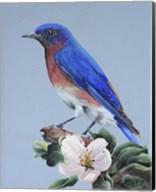 Eastern Bluebird Fine-Art Print