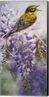 Yellow Bird in Wisteria Fine-Art Print