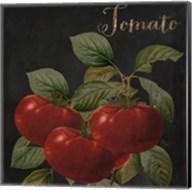Medley Tomato Fine-Art Print