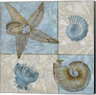 Sea Life V Fine-Art Print