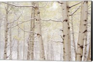 Autumn Aspens With Snow, Colorado Fine-Art Print