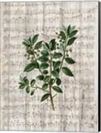 Musical Botanical 2 Fine-Art Print