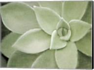 Soft Agave Fine-Art Print