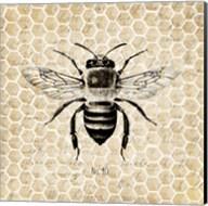 Honeycomb No 40 Fine-Art Print