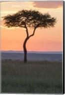 Sunset over Tree, Masai Mara National Reserve, Kenya Fine-Art Print