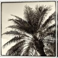 Palm Tree Sepia I Fine-Art Print