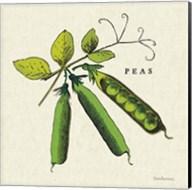 Linen Vegetable IV v2 Fine-Art Print