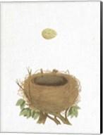 Spring Nest II Fine-Art Print