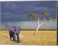 Elephant Walking Fine-Art Print