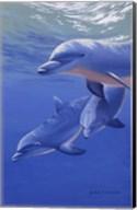 Dolphin Smile Fine-Art Print