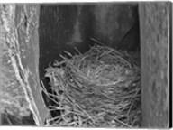 Robin's Nest Fine-Art Print