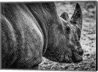Rhino - Black & White Fine-Art Print