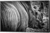 Rhino II - Black & White Fine-Art Print