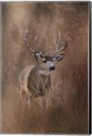 Muley - Malheur Fine-Art Print