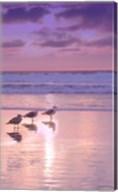 Seagull Beach II Fine-Art Print