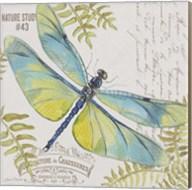 Botanical Dragonfly D Fine-Art Print