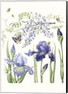Iris & Wisteria Fine-Art Print