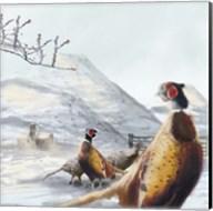 Ring Necked Pheasant Fine-Art Print
