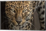 The Jaguar Fine-Art Print