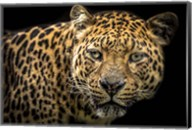 The Jaguar II Fine-Art Print