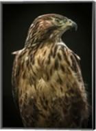 Predator Bird Fine-Art Print