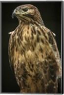 Predator Bird II Fine-Art Print