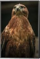 Predator Bird III Fine-Art Print