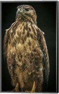 Predator Bird IV Fine-Art Print