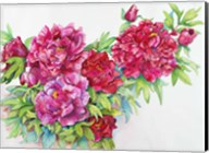 A Study of Red Peonies Fine-Art Print