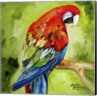 Macaw Tropical Fine-Art Print