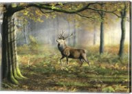 Red Stag Fine-Art Print
