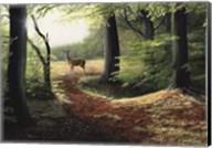 Roe Deer Fine-Art Print