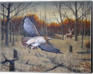 Red-Tailed Hawk Fine-Art Print