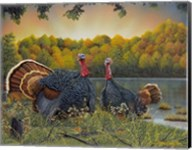 Turkey Season Fine-Art Print