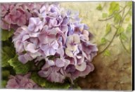 Hydrangea With Ivy Fine-Art Print