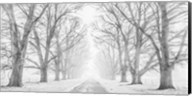 Tree Lined Road in the Snow Fine-Art Print