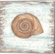 Ocean Snail Fine-Art Print