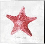 Red Starfish Fine-Art Print