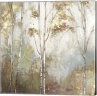 Fine Birch II Fine-Art Print