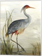 Grey Heron Fine-Art Print
