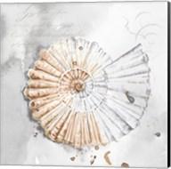 Blush Shell II Fine-Art Print