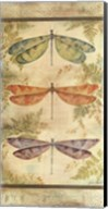 Classical Dragonfly Panel Fine-Art Print