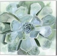 Verdant Succulent III Fine-Art Print