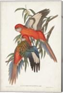 Tropical Parrots I Fine-Art Print