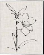 Floral Ink Study I Fine-Art Print