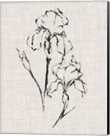 Floral Ink Study II Fine-Art Print