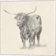 Longhorn Steer Sketch I Fine-Art Print