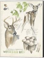 Wildlife Journals IV Fine-Art Print